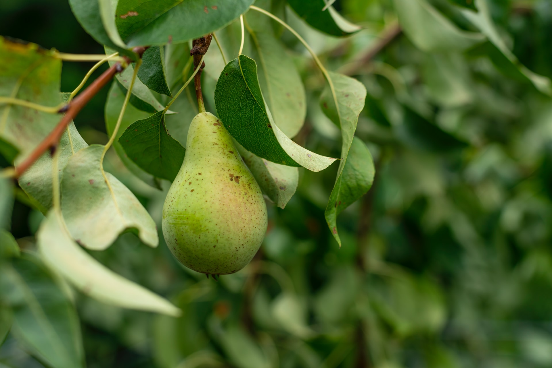 De vrucht van de Geest - Joël Treuren